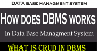 how does database management system works?